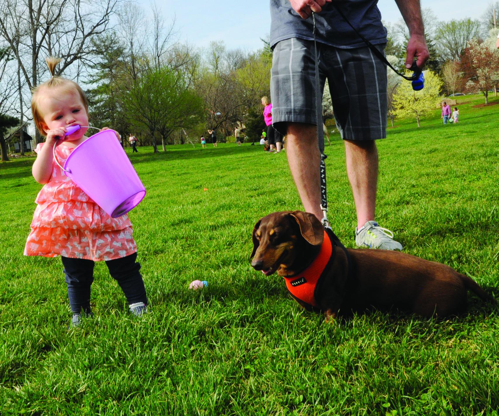 Webster Groves Dog Park